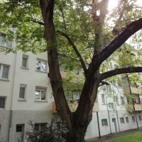 Verkaufte Eigentumswohnung 2 Zimmer, Küche, Bad in Mannheim-Lindenhof